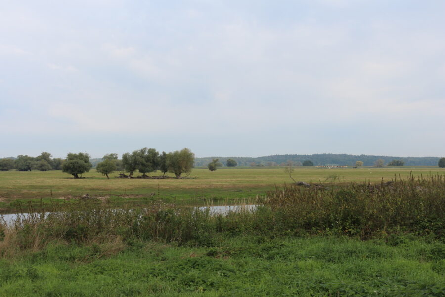 Im unteren Odertal auf polnischer Seite